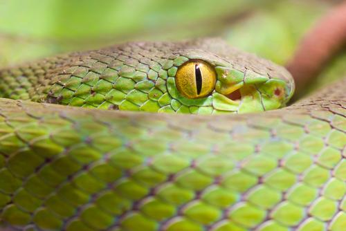 SnakeCloseup