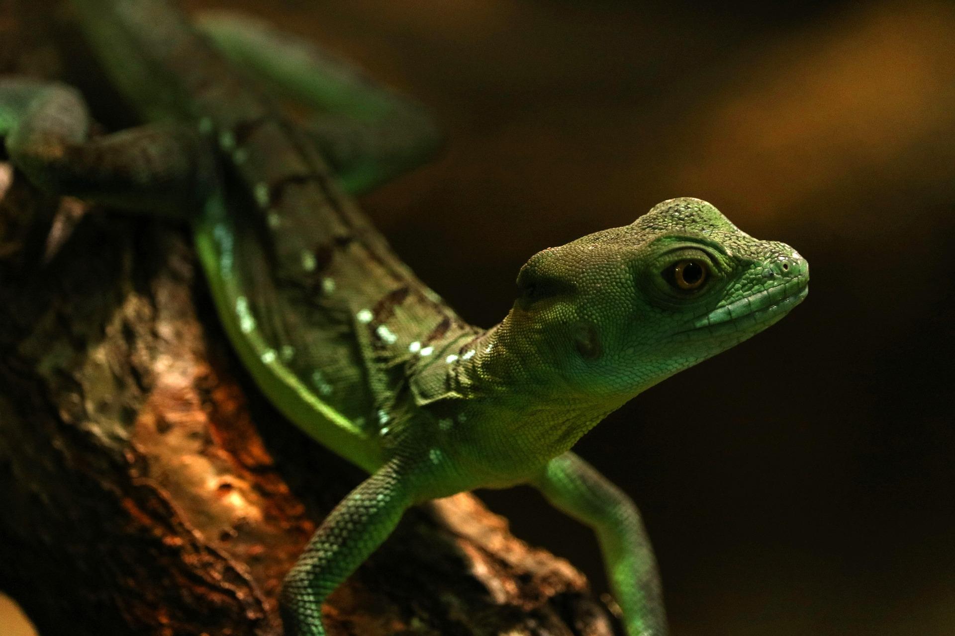 gecko-1246997_1920