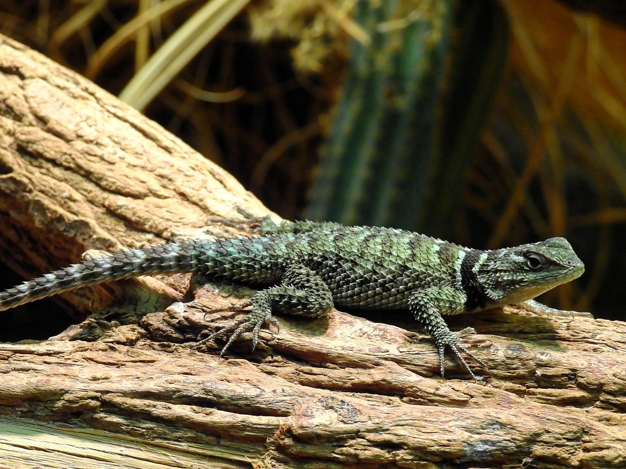lizard-1355693_1280